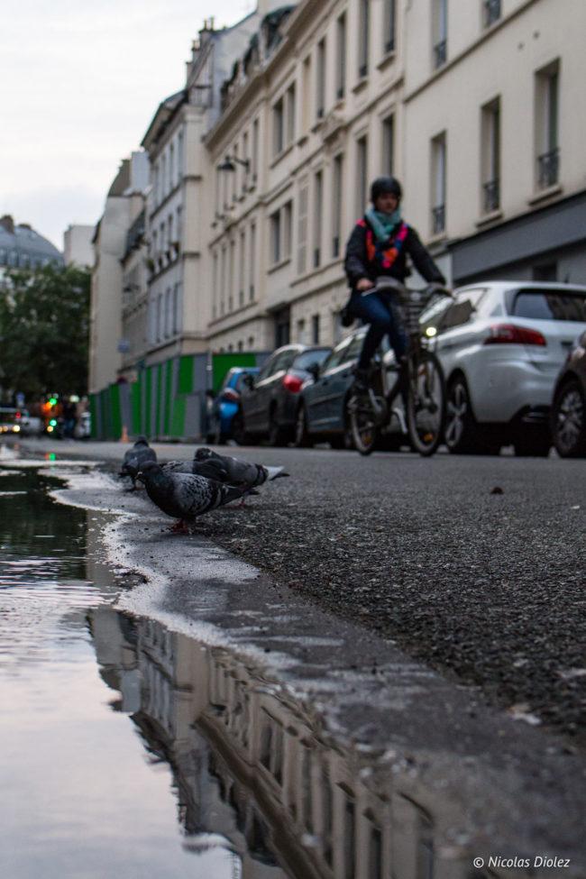 Pigeons et cyliste, 10e arrondissement